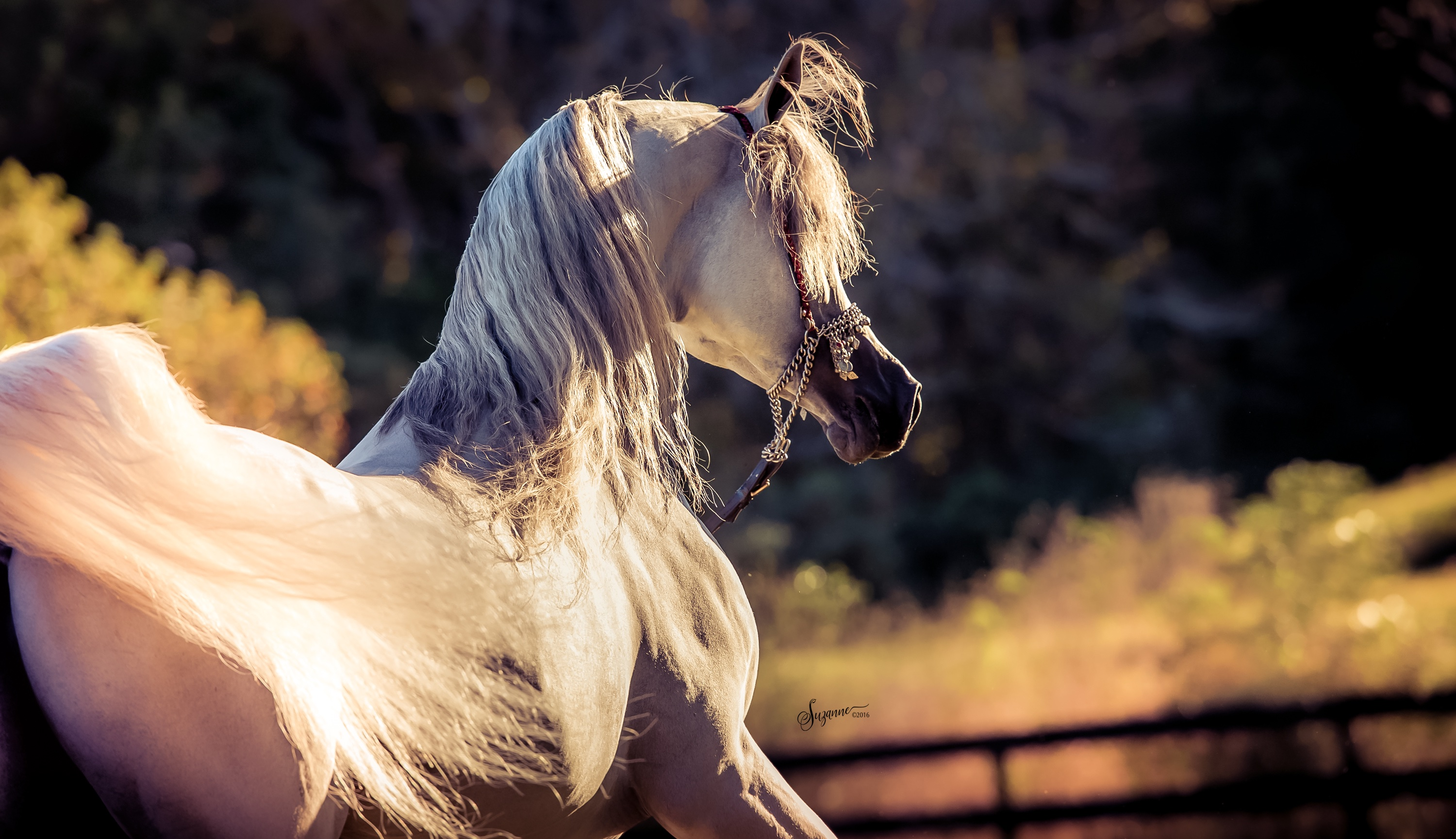 Equine Photography by Suzanne Inc EQUINE PHOTOGRAPHY by