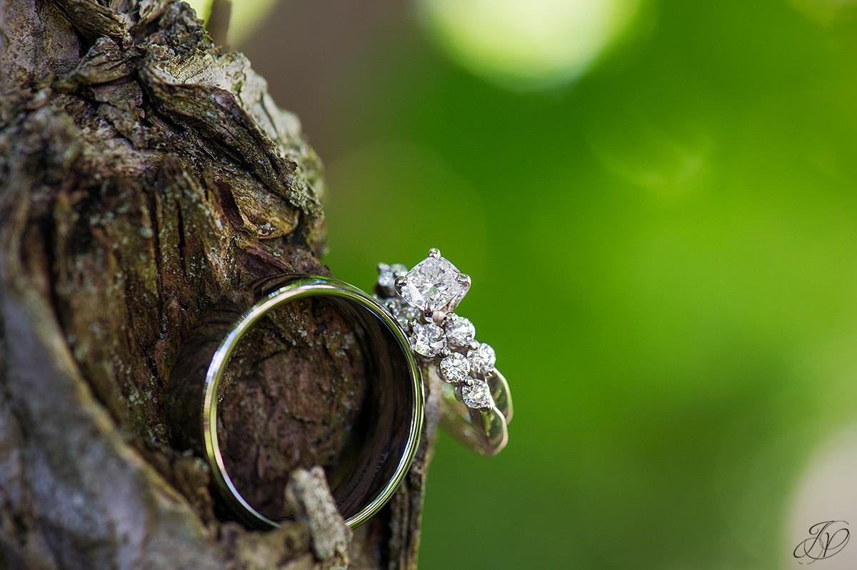 details of wedding rings on tree