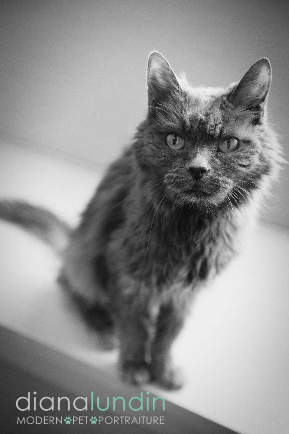 los angeles cat photographer