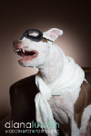 Dudley the Aviator