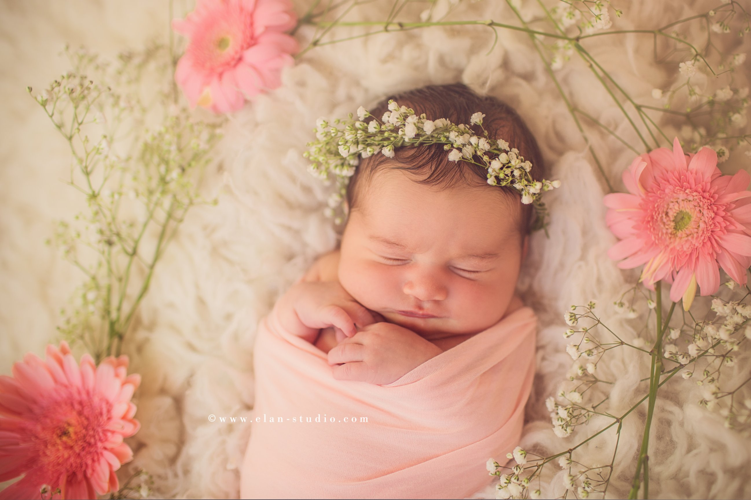 newborn girl with baby's breath flower crown and pink Gerbera daisies