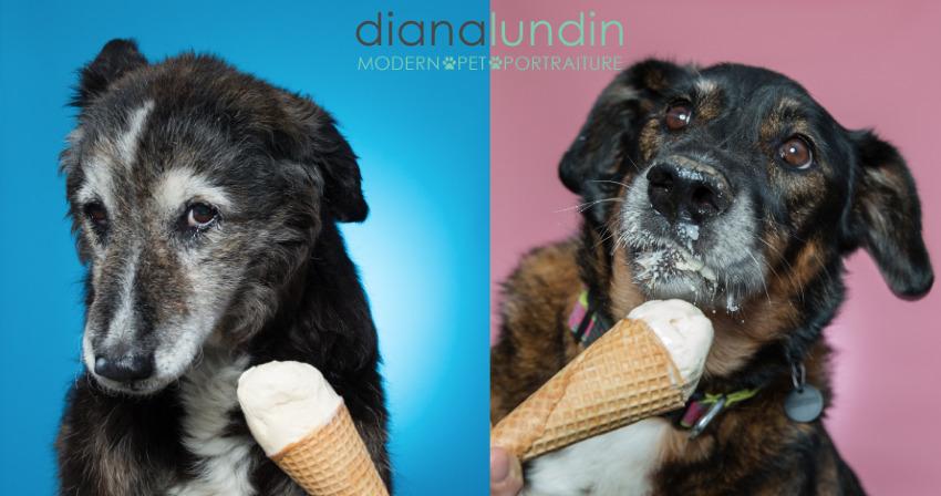 los angeles dog photography