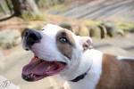 A Great Rescue Story / Regional Animal Shelter / NY Animal Photographer