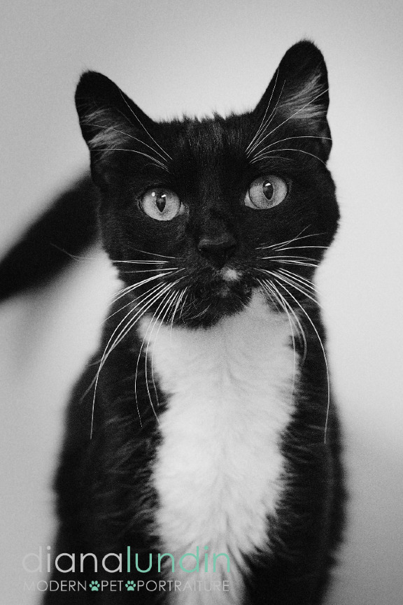 photo of a black and white cat