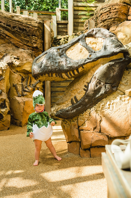 The Boneyard Playground, The Boneyard, Animal Kingdom Attractions