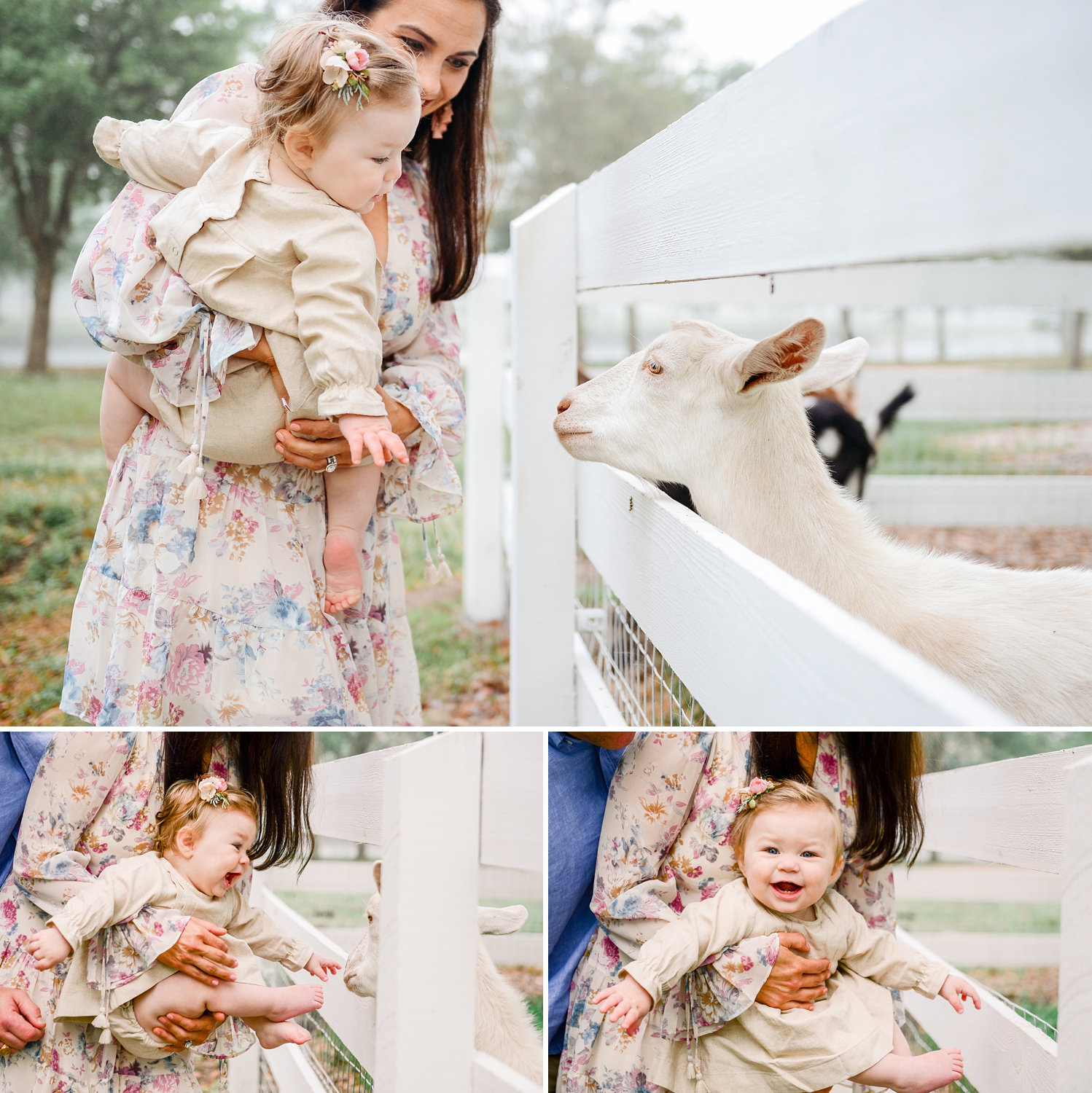 Congaree and Penn, family farm session, goats, goat with a baby, Ryaphotos